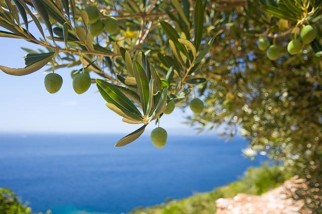 huile d'olive et AVC